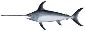 Swordfish-1
